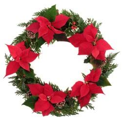 Poinsettia wreath i